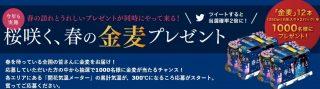 Walkerplus × Suntory金麦 共同企画「桜咲く、春の金麦プレゼントキャンペーン」