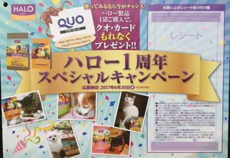全プレ】ベッツ・チョイス・ジャパン「ハロー1周年スペシャルキャンペーン