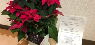 SuntoryのTwitter懸賞で「プリンセチア」が当選