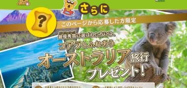 ロッテの「新しいコアラの仲間を大募集!」キャンペーン