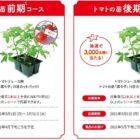 トマトの苗や野菜飲料が当たるレシートキャンペーン♪