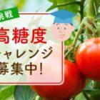 博士に挑戦 第1弾☆高糖度トマトを作ろう!チャレンジャー大募集